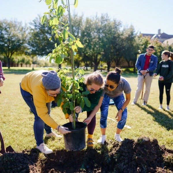 Southwestern University - A 2019 Tree Campus USA®