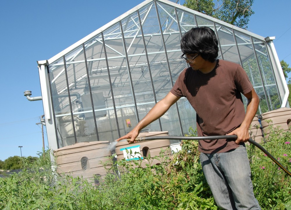 Sophomore biology and environmental studies major Ben Galindo waters plants in the community garden.