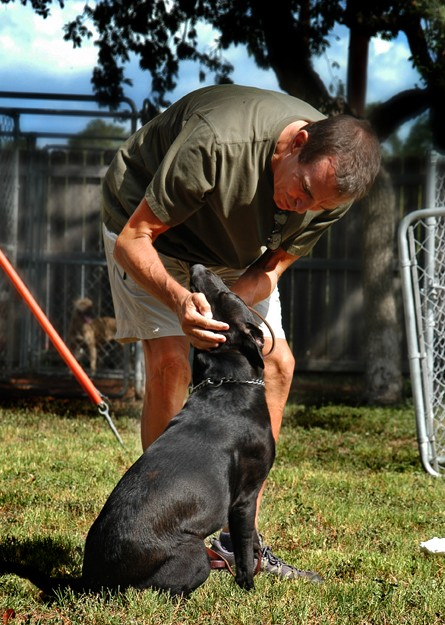 Kinesiology Professor Jimmy Smith spends countless hours working with dogs at the Georgetown Animal Shelter.