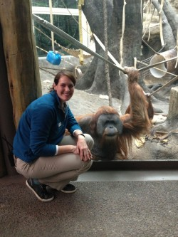 Stephanie Braccini visits with Robert, one of the orangutans at the Saint Louis Zoo.