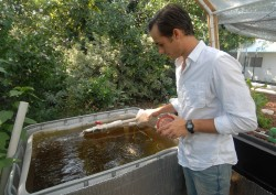 Michael Hanan feeds the fish that are the key to his aquaponics operation.