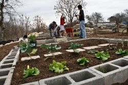 Students work in Southwestern's new community organic garden.