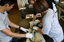 Kevin Woo, Martin Irish and Tommy Sanders are studying how shark teeth have evolved over time.