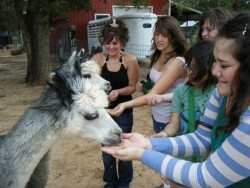 Students in Elizabeth Green Musselman's First-Year Seminar class on knitting visit with some young llamas at a fiber mill ...