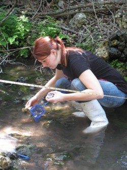 Senior biology major Ashley Wall captures salamanders at Twin Springs Preserve to be marked. (Photo by Alex Hall)