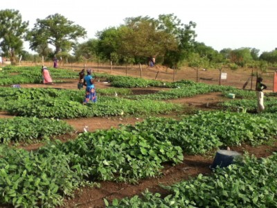"""It is with the help of a grant from the Feed the Future program of the USAID that the food ins..."