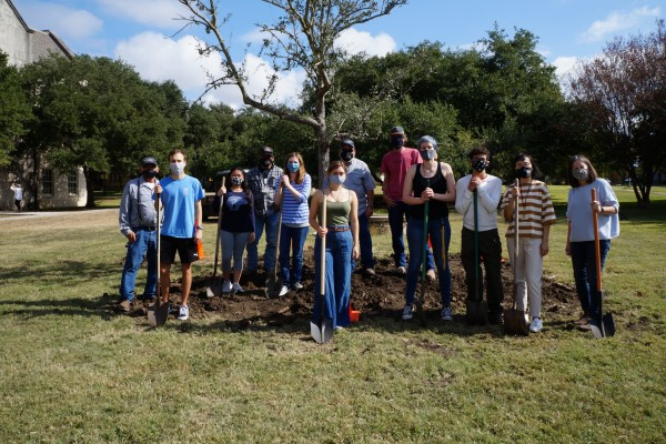 Southwestern University students and staff members planted a 22-year-old live oak in its new home.