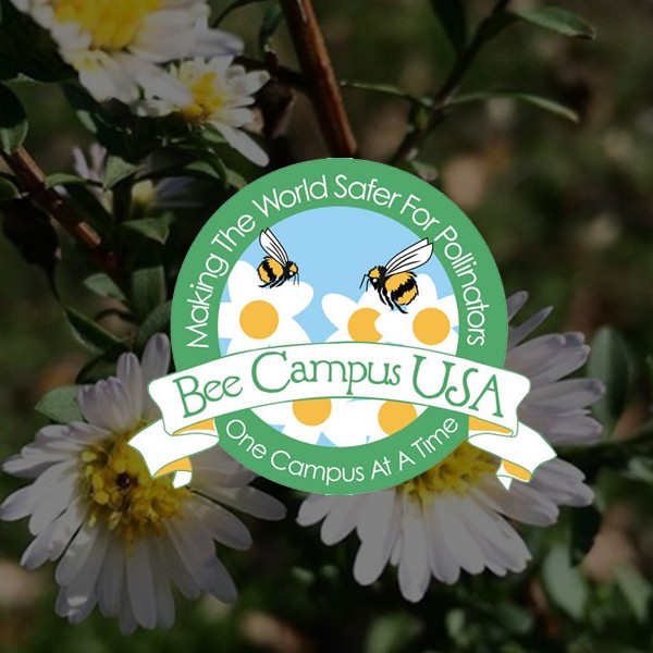 Bee Campus USA - Southwestern University