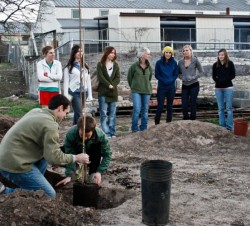 Students plant a tree in the new community garden in honor of Wangari Maathai.